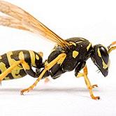 wasp pest control